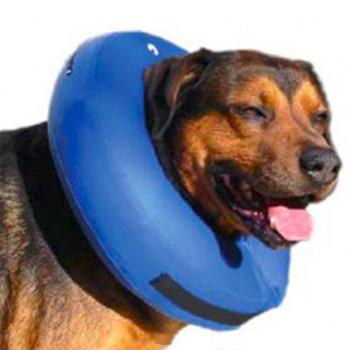 chien blog premiers-secours-animaliers