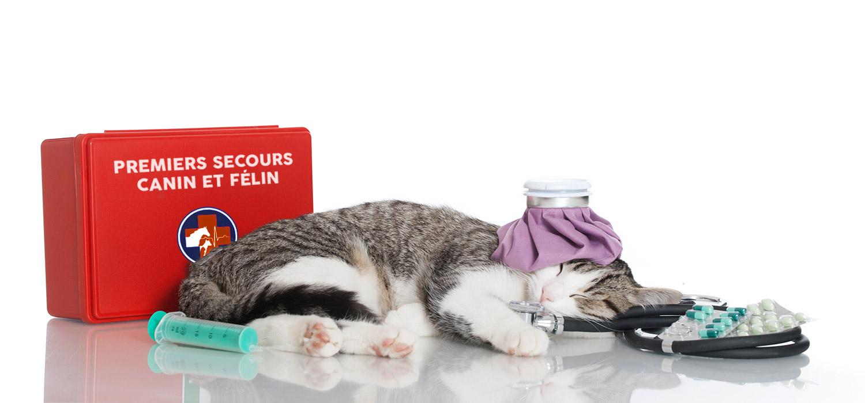 PSCF1 : Formation Premier secours Canin et Félin