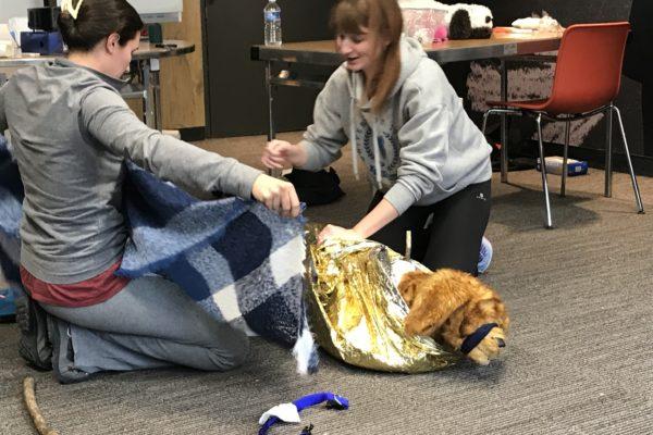 couverture-survie-chien-chat