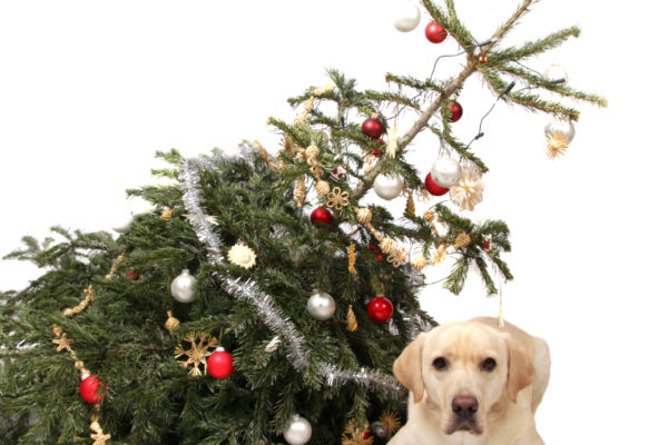 dangers-sapin-noel-chien-chat