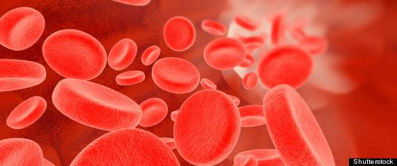 groupes sanguins chien chat