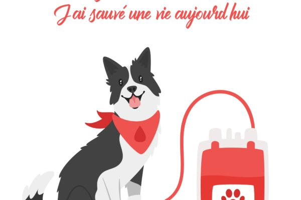 transfusion-sanguine-chien-chat