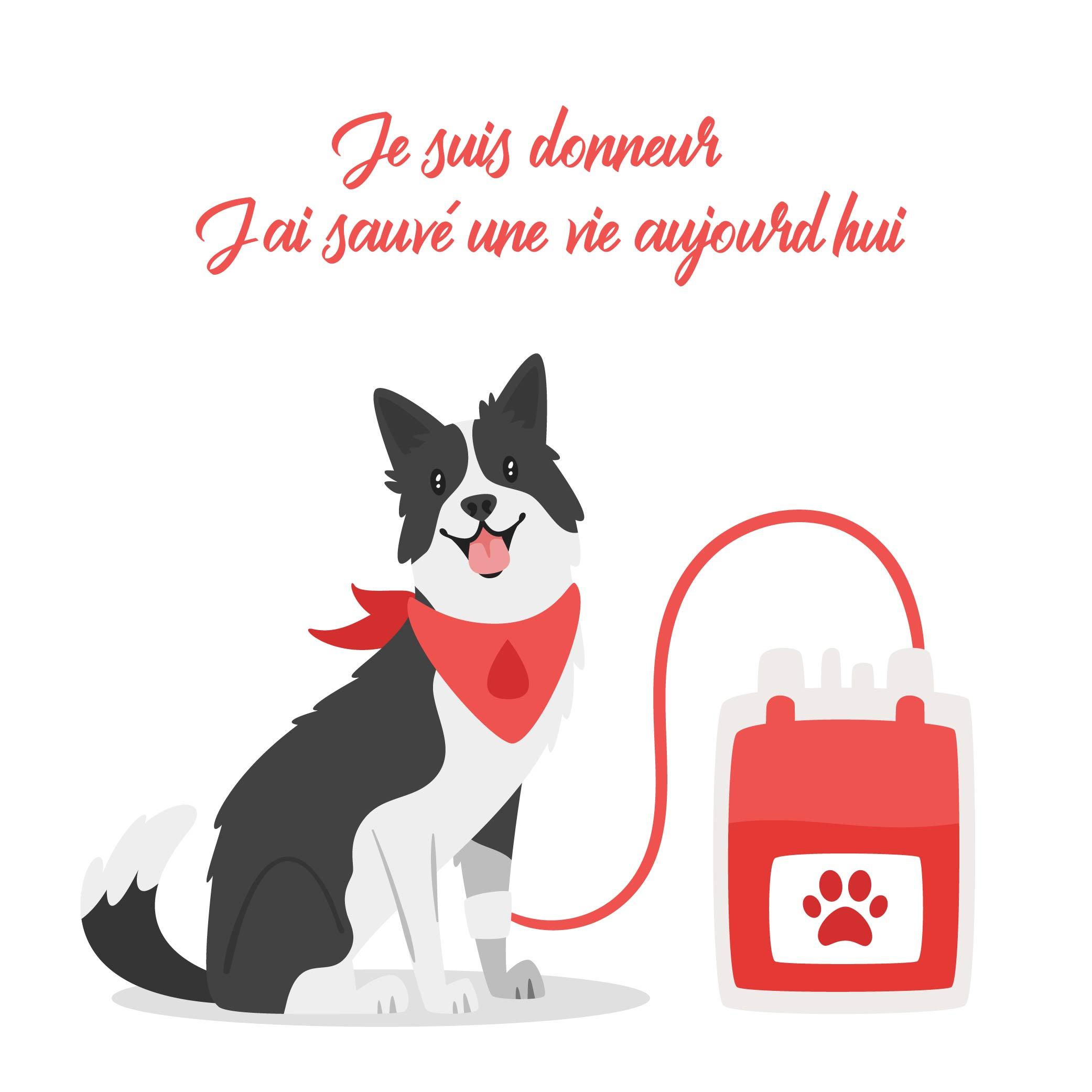 transfusion-sanguine-chien-chat