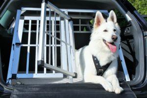 cage-de-transport-chien-voiture