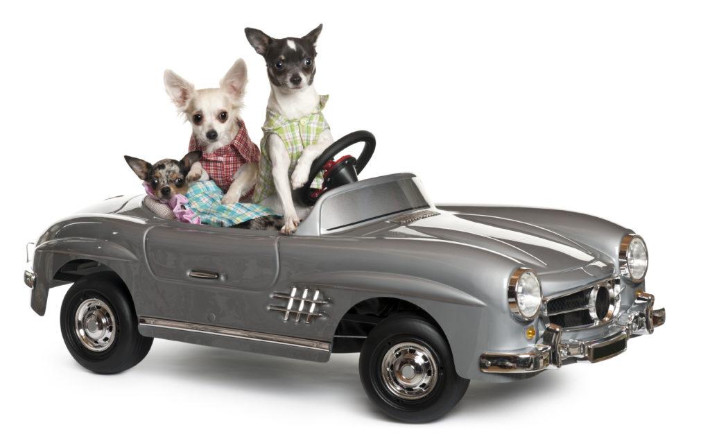 transporter son chien ou son chat en voiture