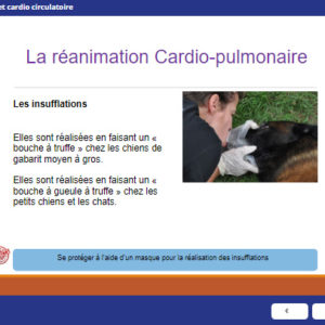 e-learning – Premiers secours canin et félin