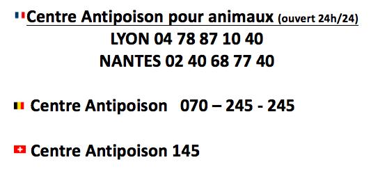 centre-antipoison-chien-chat