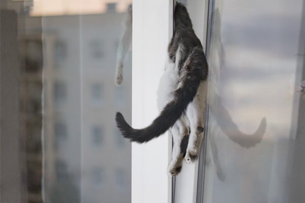 fenetre-danger-chat