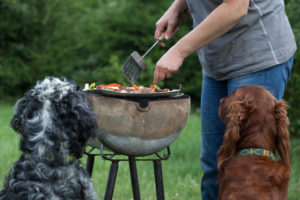 dangers barbecue chiens chats