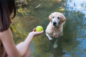 chien joue eau danger