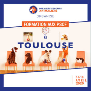 secourisme canin felin toulouse