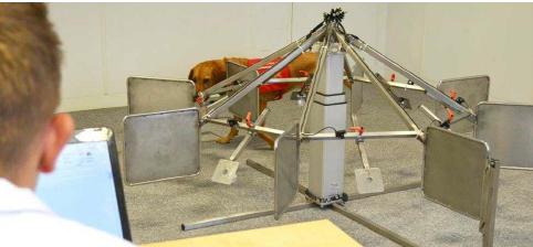 chiens detection covid19 coronavirus